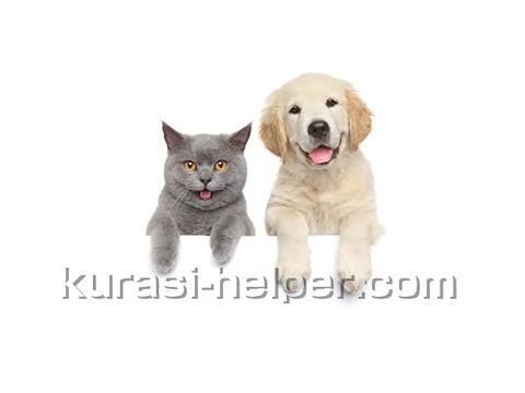 kurasi2016101701_dogcat