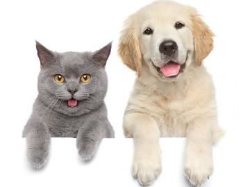 kurasi2016101701_dogcat_small
