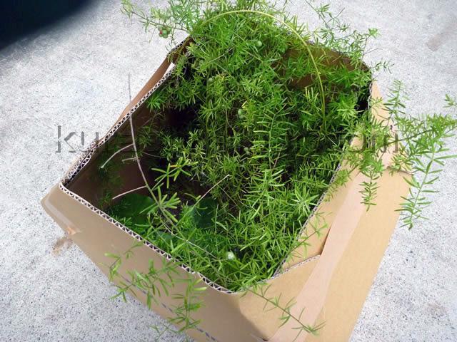 植木鉢を梱包した様子