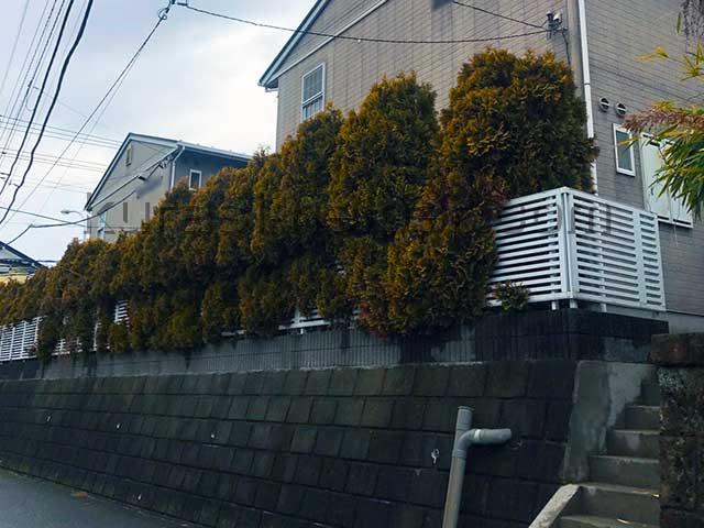 アパートの植栽を確認