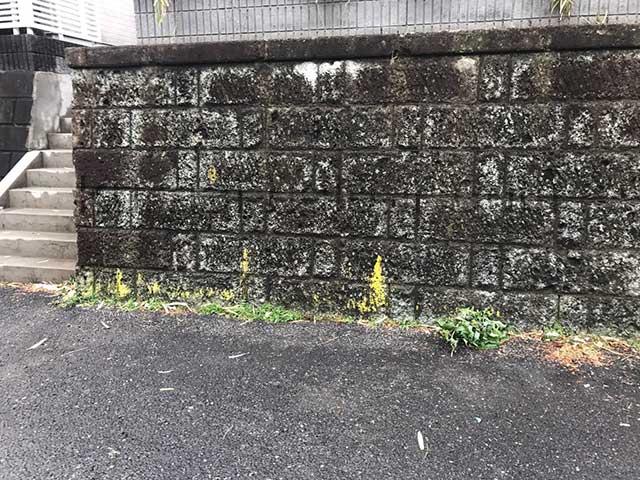 アパート外構のひび割れや苔の確認