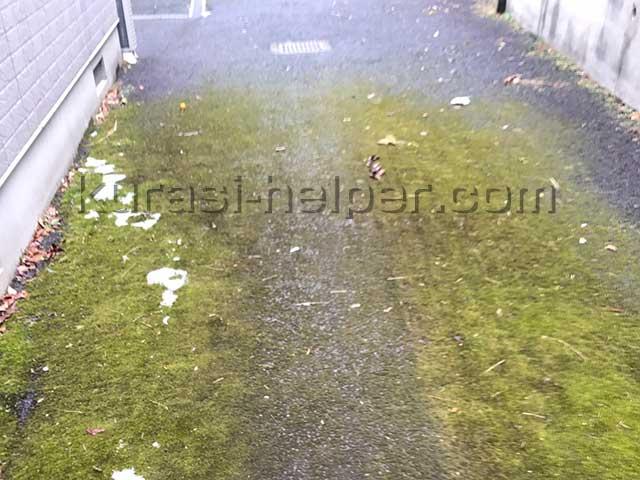 アパート周辺の落ち葉を確認